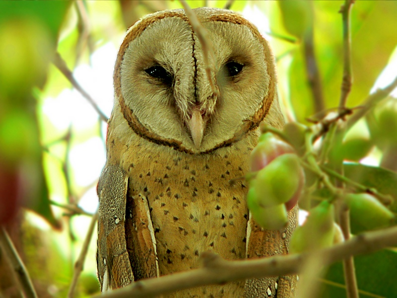 Other than the owl, are there any nocturnal birds? | GreenAnswers