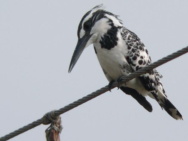 photo of kingfisher bird